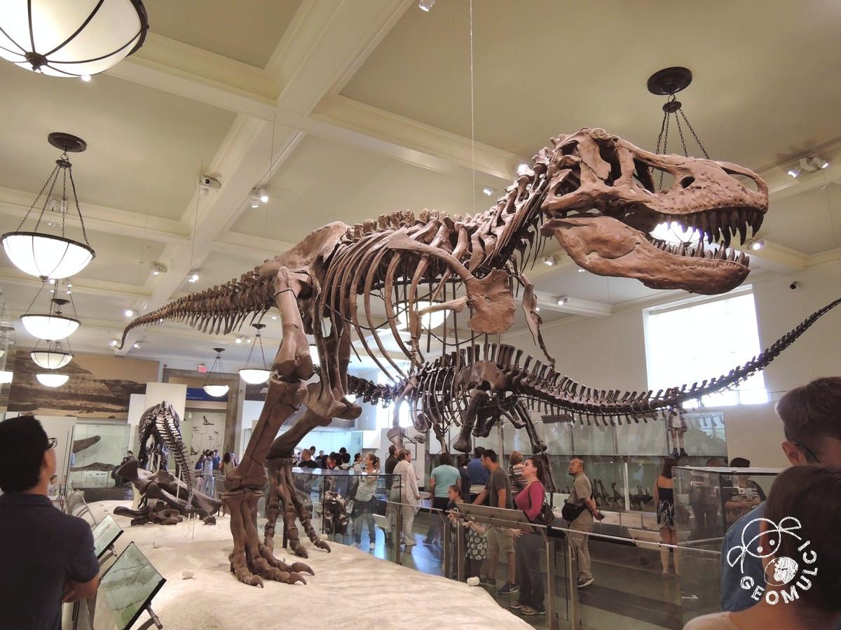 Okostje dinozavra iz muzeja v New Yorku
